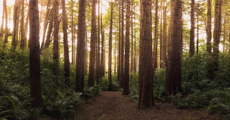 Il silenzio del bosco